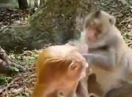 سكس الحيوانات مع البشر نيك xxnx